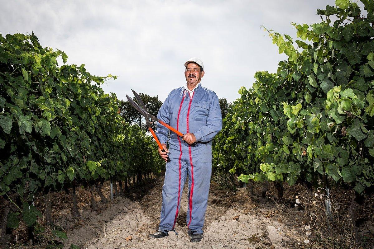 Portrait d'un vigneron du domaine Pey Blanc à Aix-en-Provence au milieu de la vigne
